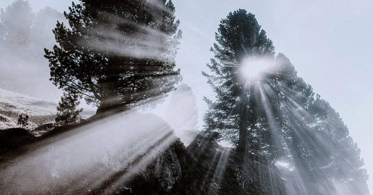 sun poking through trees in fog