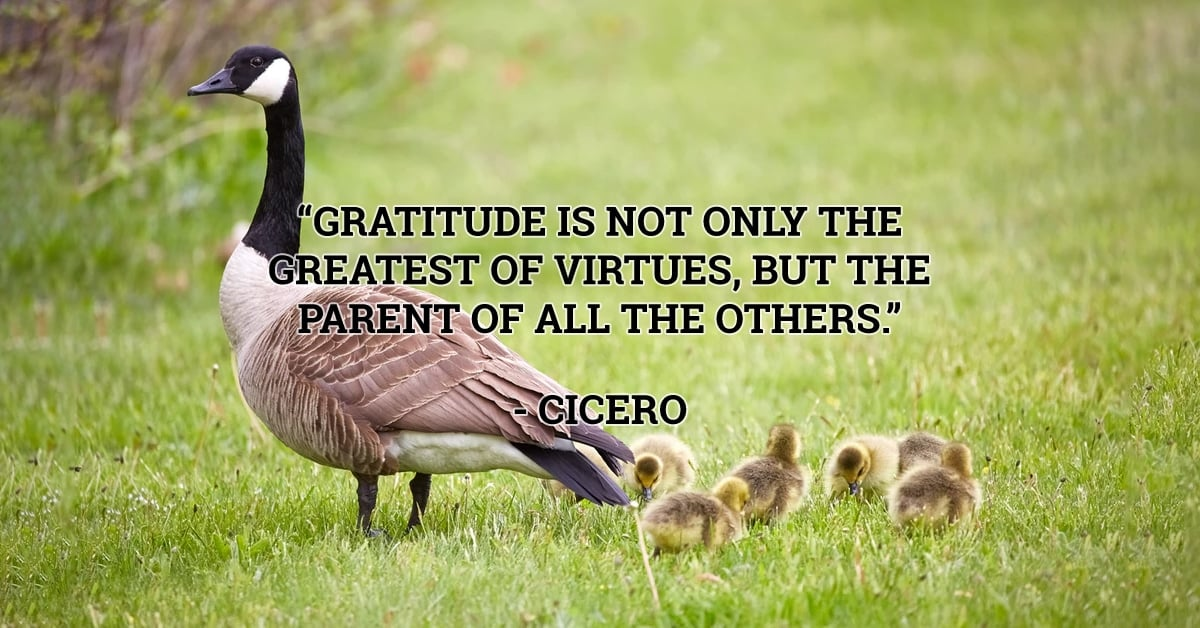 cicero gratitude quote